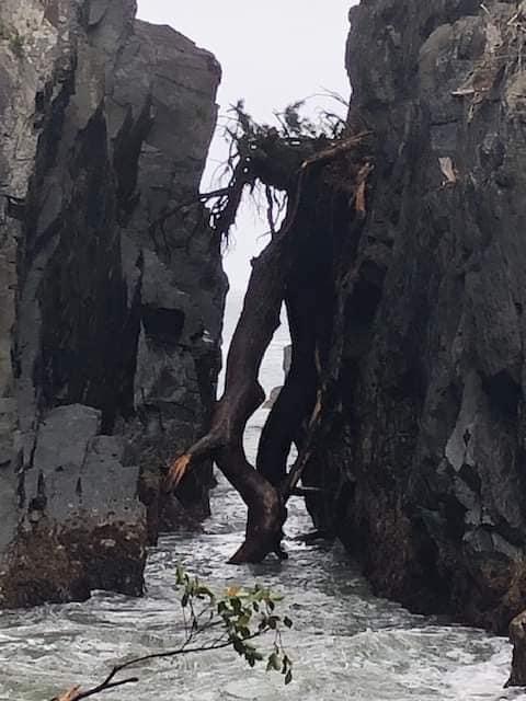 【神割崎】岩間の倒木に関して