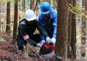 間伐体験プログラムのシーズンです。