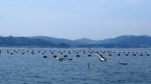 観光船 イチオシ (2)
