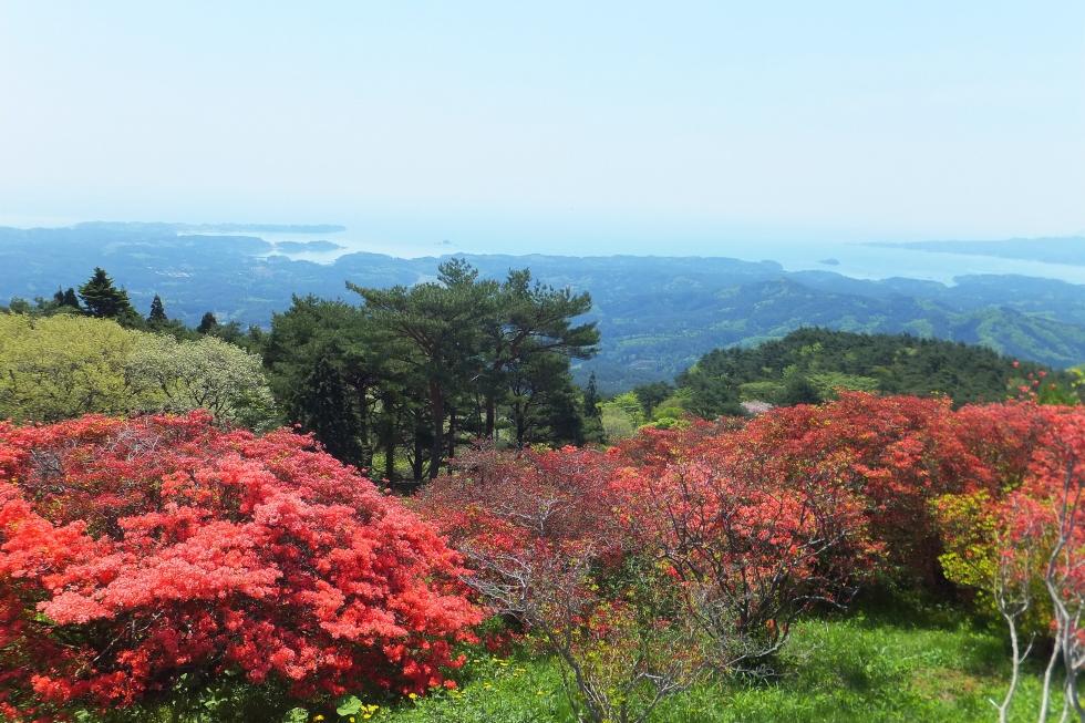 つつじ満開の田束山ウォーキング募集開始のお知らせ(JR東日本小さな旅)