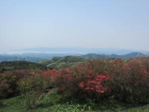 田束山 つつじ開花状況 5/2現在