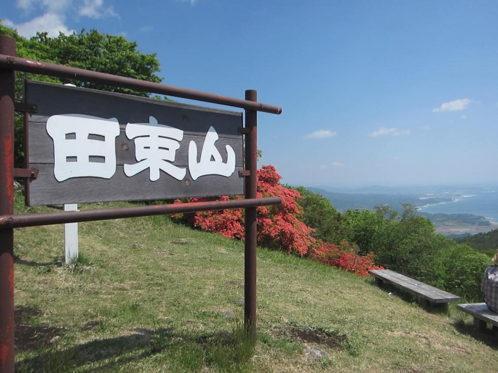 田束山 つつじ 5/13現在