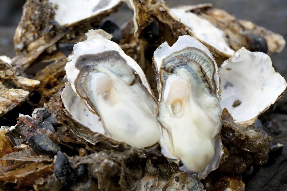 まるごと知って味わう牡蠣の料理教室