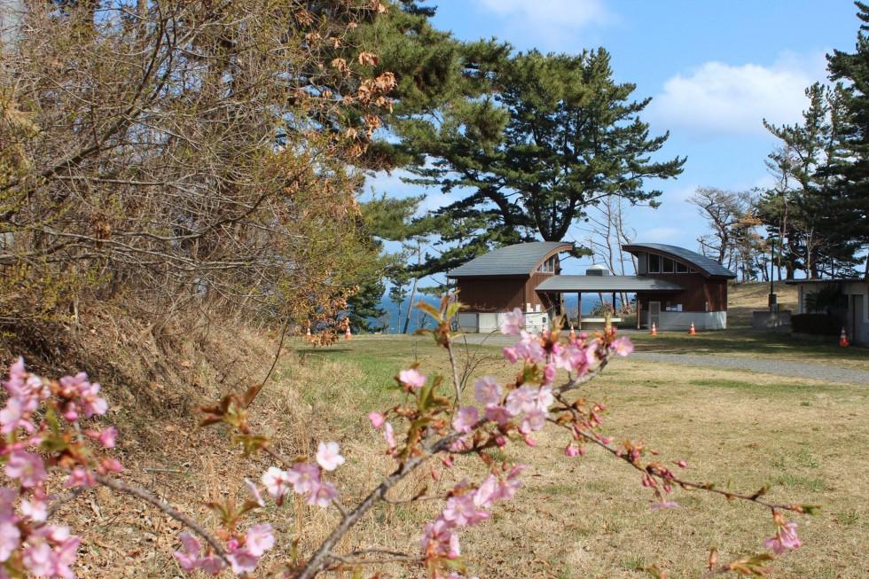 【神割崎キャンプ場】4/16<br/>フリー参加OK!第八回復興祈念桜植樹祭のお知らせ