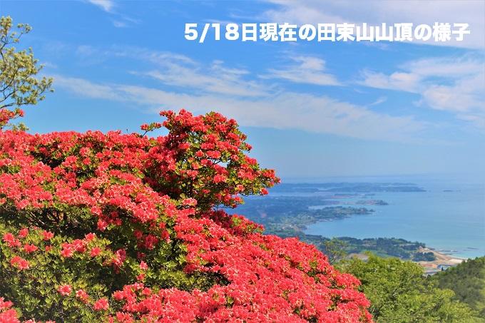 田束山のツツジが見頃を迎えました!!!(5/18現在)