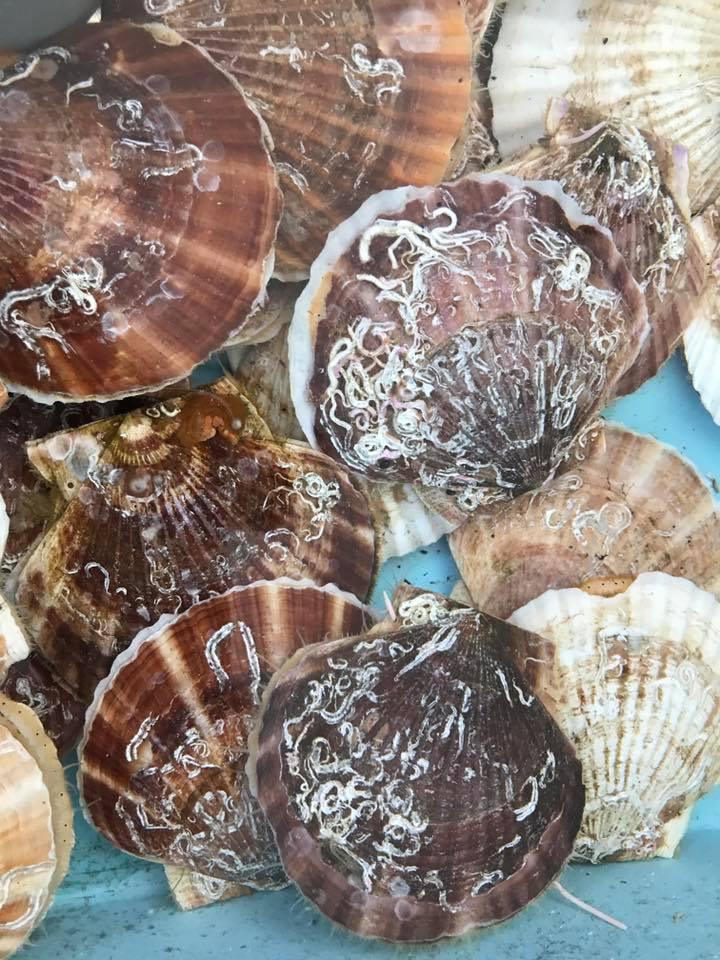 第18回「戸倉漁師の会 感謝祭」開催のお知らせ