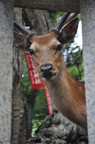 鹿(シカ)セミナー