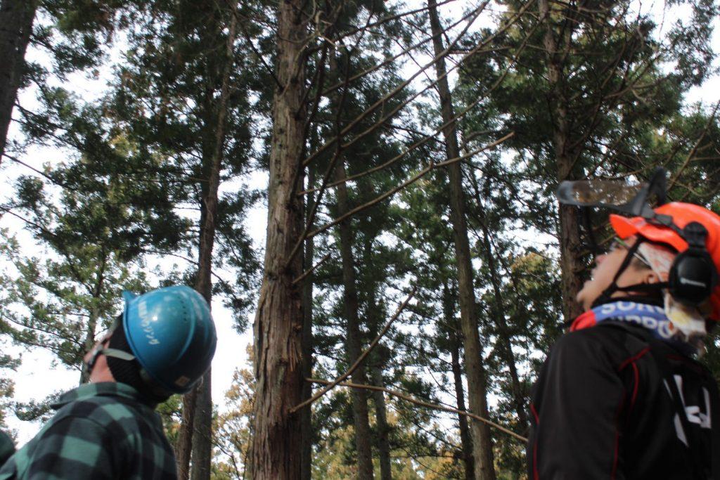 持続可能な林業(地域資源の活用)を目指して