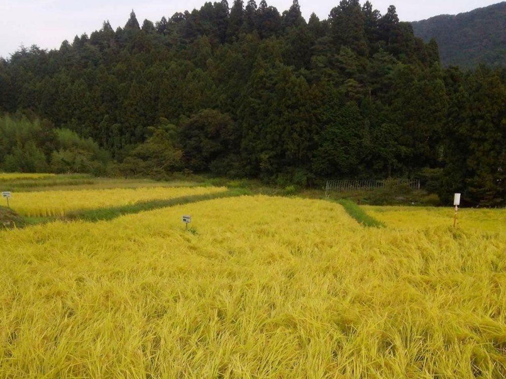 第3回みなみさんりく里山探検隊~入谷の産業・農業~開催のお知らせ