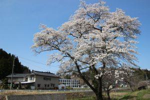 春の訪れ、イベント開催
