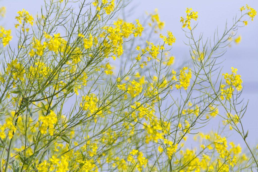 南三陸の春はイベント盛りだくさん!【イベント紹介】