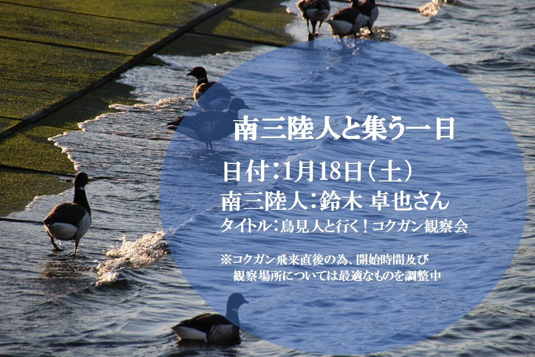 【募集中/随時更新】鳥見人と行く!コクガン観察会