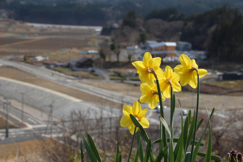 【定点観測】2020年3月下旬:志津川地区
