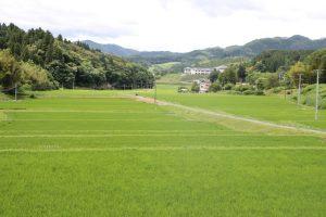 南三陸町入谷地区 稲の成長日記(6/29更新)