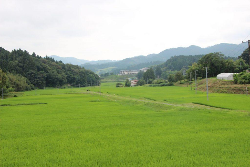 南三陸町入谷地区 稲の成長日記(7/21更新)