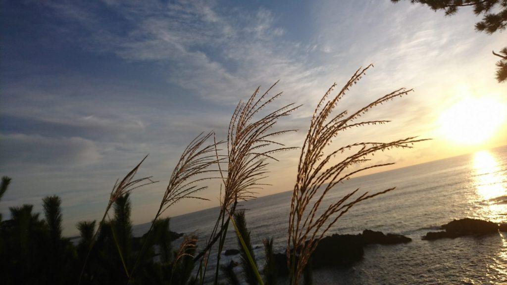 南三陸町神割崎キャンプ場の魅力を紹介します❗その5⛺