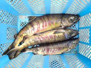 鮭セミナー