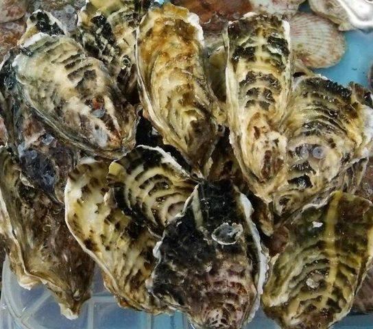 牡蠣セミナー