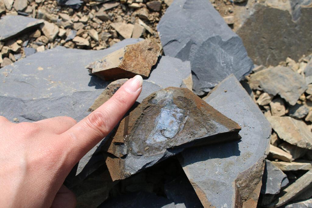 化石マニアが感じる『今後の南三陸町での展望』